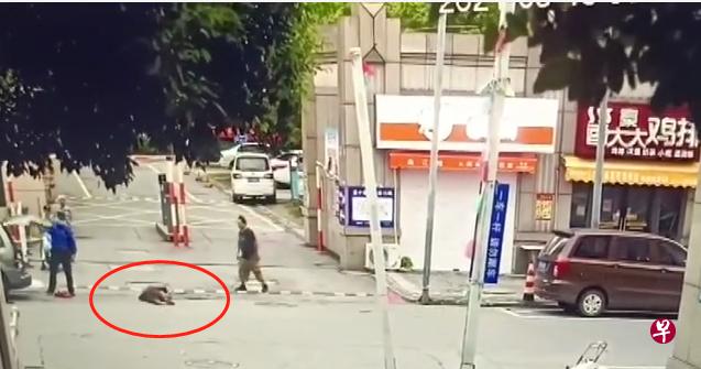 城管拎起老人摔地上 涉事人被行政拘留